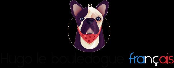 Hugo le bouledogue français